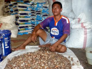 Spice trade is widespread in the Moluccas. © Marc Szeglat